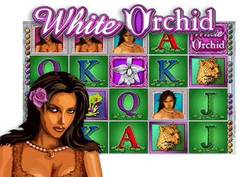 jeu white orchid