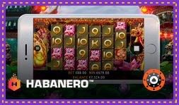 Sortie de jeu de casino : 5 Lucky Lions de Habanero